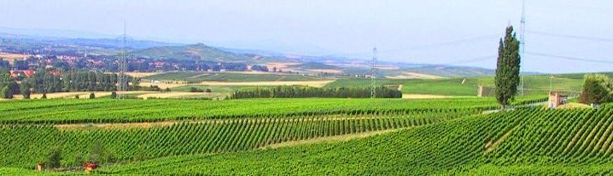 Weingut Gustavshof